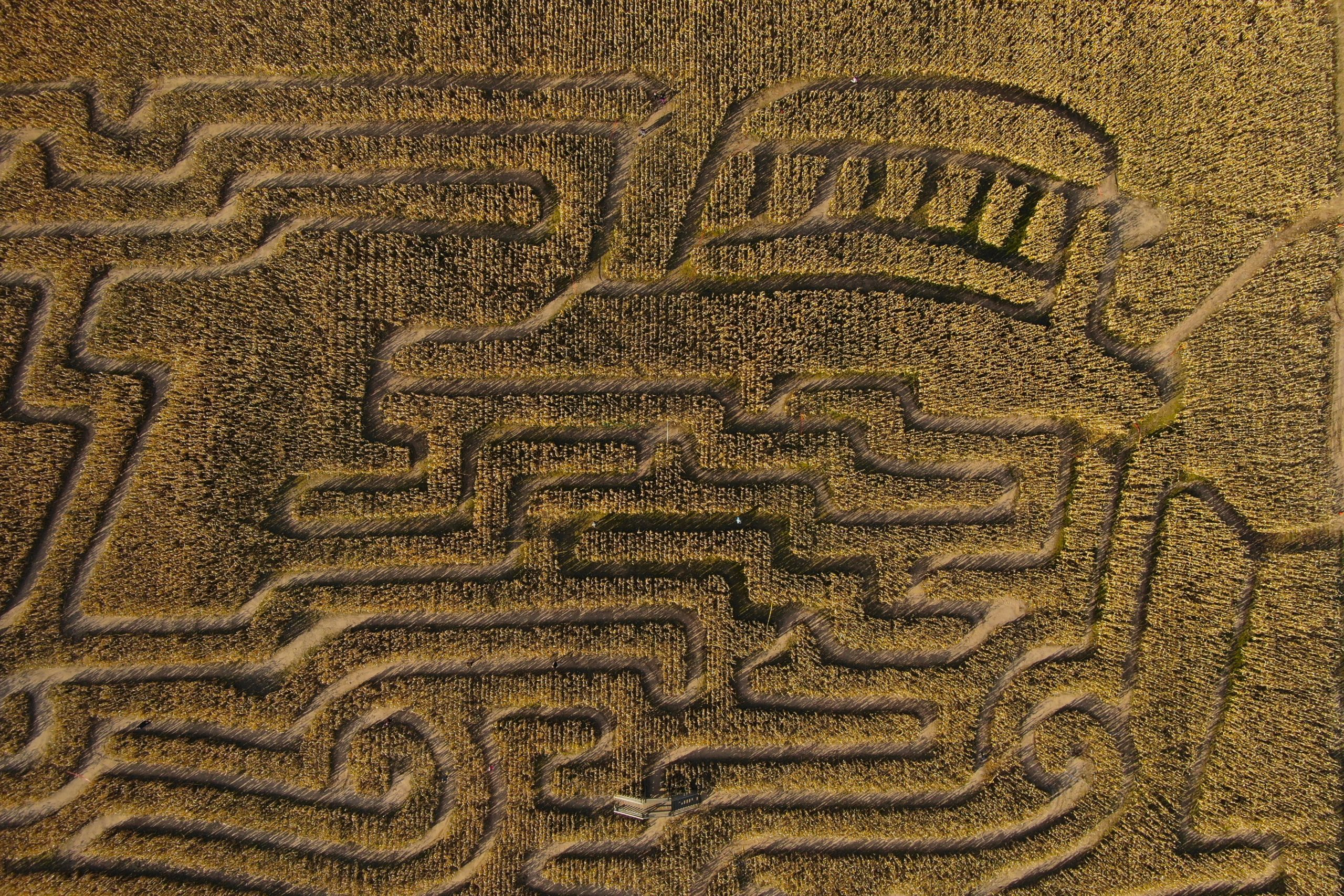 You are currently viewing Corn Maze